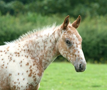 Foal Picture